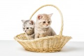 Fotografie adorable fluffy kittens sitting in wicker basket on table top