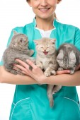Fotografie cropped shot of smiling veterinarian holding adorable kittens isolated on white
