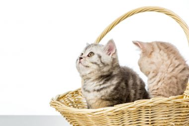 Adorable little kittens sitting in wicker basket isolated on white stock vector