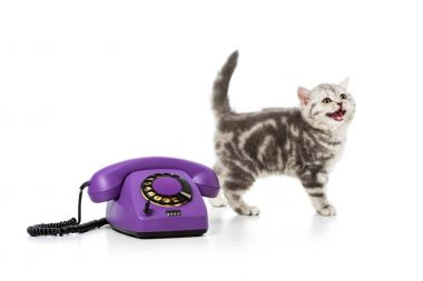 Cute little kitten with purple rotary telephone isolated on white stock vector