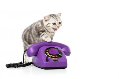 Adorable kitten on purple rotary telephone isolated on white stock vector