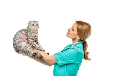 side view of veterinarian holding cute fluffy cat isolated on white