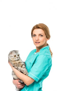 young veterinarian holding adorable scottish fold cat and looking at camera isolated on white