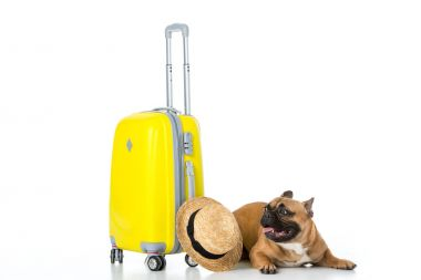adorable french bulldog with yellow suitcase and straw hat isolated on white