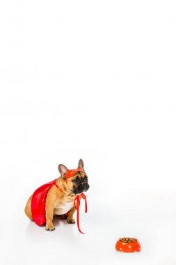 adorable french bulldog in superhero costume sitting near bowl full of dog food isolated on white