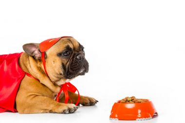 adorable french bulldog in superhero costume with bowl full of dog food isolated on white