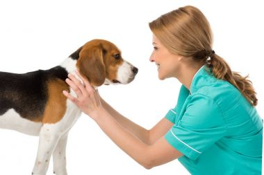 side view of smiling veterinarian in uniform with beagle dog isolated on white