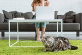Photo cropped shot of woman working with laptop while her cat lying on floor on foreground at home