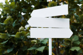 white and empty directional arrows near bush with green leaves