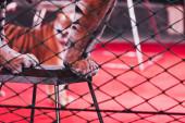 Kyjev, Ukrajina - 1. listopadu 2019: Selektivní zaměření tygra stojícího za mřížkou cirkusového jeviště