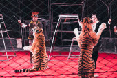 KYIV, UKRAINE - NOVEMBER 1, 2019: Selective focus of handlers performing with tigers behind grid of circus arena