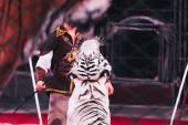 Kyjev, Ukrajina - 1. listopadu 2019: Selektivní zaměření handleru na trik s tygrem v cirkuse
