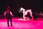 Kyjev, Ukrajina - 1. listopadu 2019: Zadní pohled na handlera vystupujícího s koňmi v cirkuse