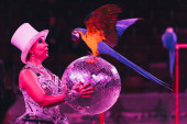 Kijev, Ukrajna - 2019. november 1.: Side view of handler holding mirror ball while performing with ara papagáj in circus