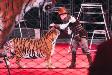 KYIV, UKRAINE - NOVEMBER 1, 2019: Side view of handler performing with tiger in circus stock vector