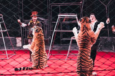 KYIV, UKRAINE - NOVEMBER 1, 2019: Selective focus of handlers performing with tigers behind grid of circus arena stock vector