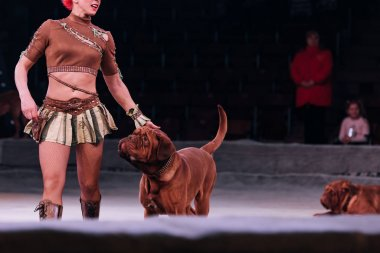 KYIV, UKRAINE - NOVEMBER 1, 2019: Cropped view of handler with dogue de bordeaux on circus stage stock vector