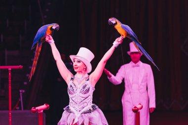 KYIV, UKRAINE - NOVEMBER 1, 2019: Selective focus of handler holding ara parrots in circus stock vector