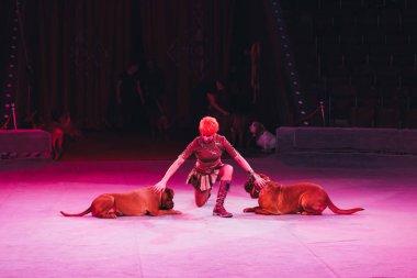KYIV, UKRAINE - NOVEMBER 1, 2019: Attractive handler doing trick with dogue de bordeaux in circus stock vector