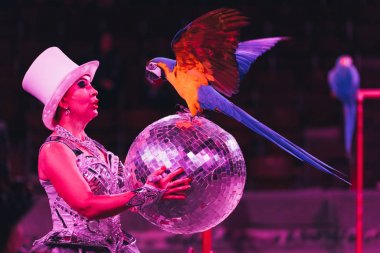 KYIV, UKRAINE - NOVEMBER 1, 2019: Side view of handler holding mirror ball while performing with ara parrot in circus stock vector