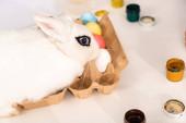 weißer Hase sitzt in Eierschale mit bunten Ostereiern