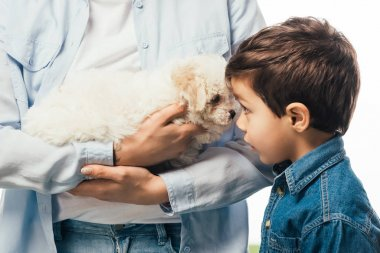 cropped view of woman holding cute Havanese puppy and son looking at it isolated on white