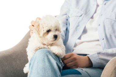 Cropped view of woman stroking Havanese puppy and sitting on armchair isolated on white stock vector