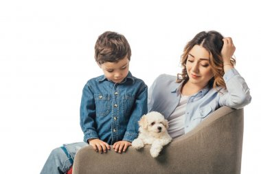 mother and son sitting on armchair and looking at Havanese puppy isolated on white