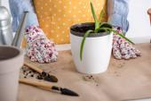 Vágott kilátás nő közelében virágcserép aloe és kertészeti szerszámok az asztalon a konyhában