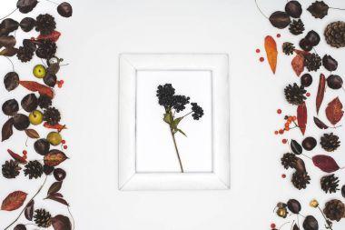 black rowan berries in frame