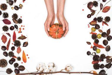 ripe pumpkin in hands