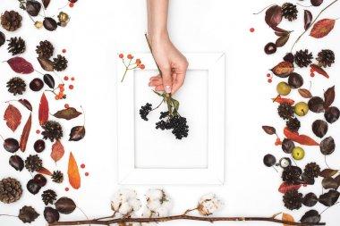 black rowan berries in hand