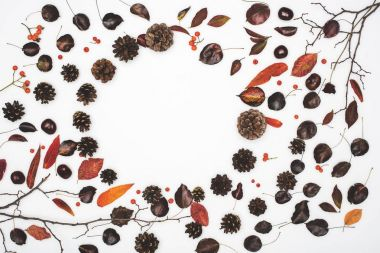 dried autumn leaves and pine cones