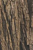 fa kéreg textúra