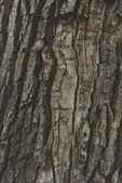 Struktura kůry stromu