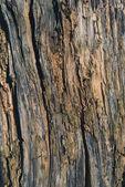texturou kůry stromu