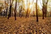 őszi park este