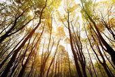 podzimní Les na slunečný den