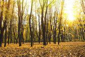 gyönyörű őszi park