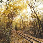 Železnice v podzimním lese