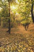 Gyönyörű őszi erdő