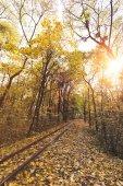 Fotografie Železnice v podzimním lese