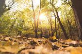 Spadané listí v podzimním lese