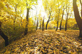 podzimní les pokryté spadaného listí