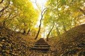 schody v podzimním parku