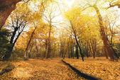 Fotografie silnice v podzimním parku pokrytý listy