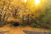 Photo beautiful autumn park