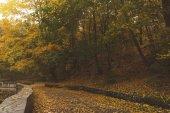 Fotografie silnice v podzimním parku