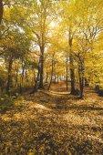Stezka v podzimním parku