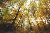Fotografie krásný podzimní park